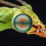 無脊椎動物の視覚器