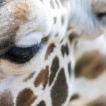 「脊椎動物の眼」  脳からの発生した眼