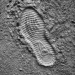 足跡からわかる身体の特徴