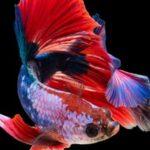 水族館で話したい豆知識!魚の耳石について意外な秘密を紹介します。
